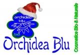 3 x cadou de Craciun Bio de la Orchidea Blu