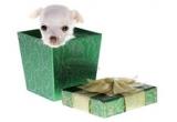 un premiu pentru animalutul castigator (in valoare de 100 RON)