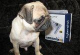"""Aparat foto digital Sony, 4 x tricou<br type=""""_moz"""" />"""