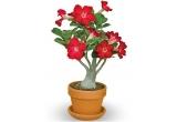 1 x floarea preferata de pe www.Floraden.ro