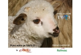 1 x miel oferit de sponsorul nostru Romvac Company SA