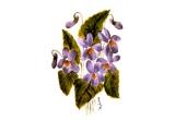 1 x set de ceai din portelan pictat (ceainic + 6 cescute), 1 x set de ceai din portelan pictat (ceainic + 2 cescute), 1 x o icoana pictata pe sticla, 2 x o cana din portelan pictata