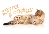 1000 x o paturica pentru pisici, 190 x o jucarie pentru pisici, 1 x iPad cu Wi-fi 16GB negru
