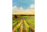 30 x vizita la cramele Companiei Cotnari si Casa de Vinuri Cotnari, 120 x bax de vin